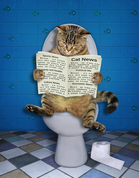 The funny cat is sitting on the toilet bowl and reading a newspaper.