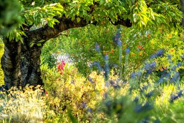 Provencalischer Garten