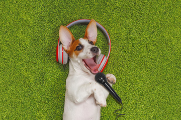 Puppy lying on green carpet and singing song in microphone