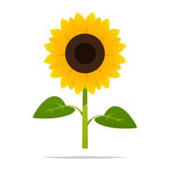 Cartoon sunflower vector isolated illustration