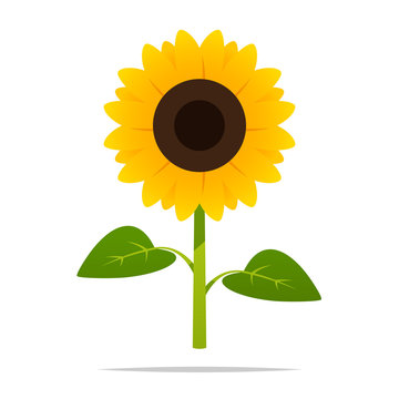 Cartoon sunflower vector isolated illustration
