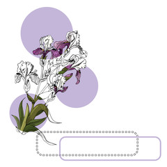 Set of  bouquet of iris flowers, lilac circles and frames. Hand drawn ink and colored sketch. Collection of color and monochrome  objects isolated on white background.