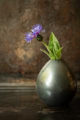 Blue cornflower in vase