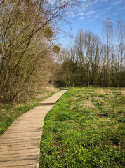 Wooden pathway in rural landscape, path covered with chicken wire for safety, mistletoe in trees, trail for outdoor hiking or family friendly walking