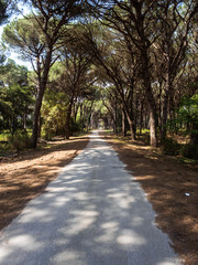 Dirt pathway in a Mediterranean pine forest