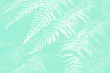 Wall Mural - Lady fern plants in the garden Neo mint pantone pastel color background