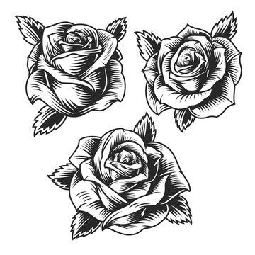 Vintage beautiful rose flowers set