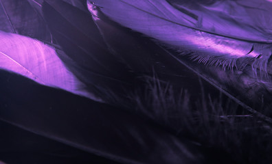 Beautiful abstract close up color black purple and light blue feathers background and wallpaper