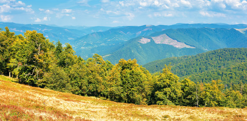 carpathian countryside in early autumn. beech forest on the edge of a hill. ridges rolling in to the horizon. blue sky with clouds on a sunny september day. panoramic view