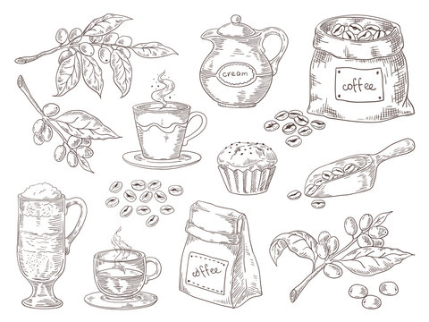 Hand drawn coffee beans. Vintage sketch of coffee leaves branch roasted beans and bag. Vector isolated retro graphic sketch scoop and cup on white background