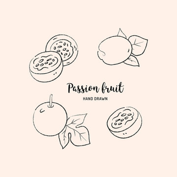 Passion fruit drawing, passion slice and whole juicy fruit. Sketch of passion fruit on white background. Vector isolated illustration