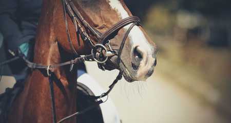 The muzzle is sports red stallion in the bridle. Dressage horse.