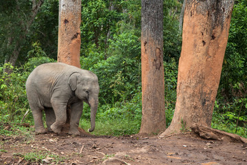Baby Elephant Scratching on a Tree