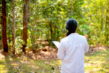 The back of scientist woman hold magnifying glass and document look to the forest with the concept of research and experiment for environment. Wall mural