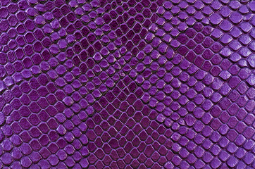 Wall Mural - Violet snake skin, as background. Reptile.