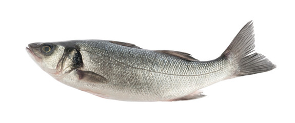 seabass fish isolated without shadow