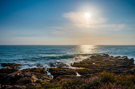 View of Pacific Ocean at dusk with wildflowers in the foreground a a rocky shoreline.