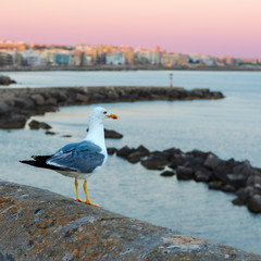 Seagull that has settled on the parapet of the promenade of Gallipoli, Apulia. Italy