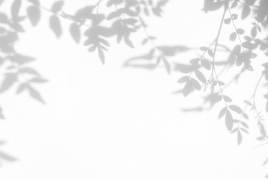 Gray shadow of the leaves on a white wall. Abstract neutral nature concept background. Space for text.