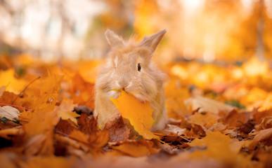 Cute decorative rabbit in autumn leaves. Golden autumn in maple leaves