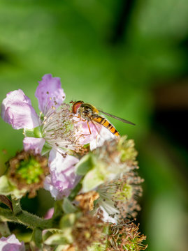 Black and yellow fly insect on flower