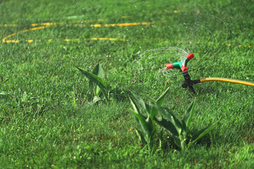 automatic sprinker. lawn grass watering.