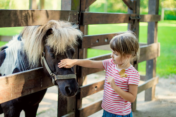 Cute little girl petting a pony in the zoo through a wooden fence