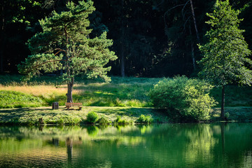 A lonely green tree with a bench in an idyllic forest landscape in summer at a lake Wall mural