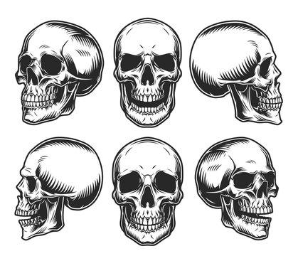 Human skulls collection