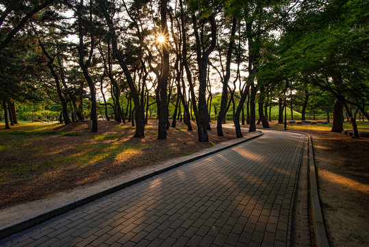 Pedestrian path at the Daereungwon Tombs complex in Gyeongju