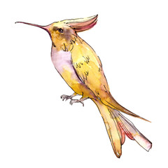 Sky bird colibri in a wildlife isolated. Watercolor background set. Isolated hummingbird illustration element.