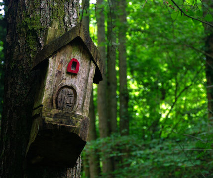 Wooden houses carved in the trees