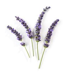 Fotorolgordijn Lavendel blooming lavender flower