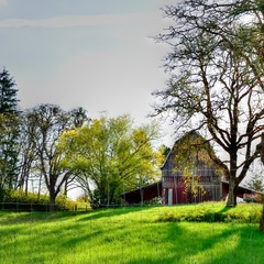 Old weathered barn in green pasture with trees and blue sky