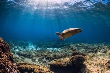 Photo sur Aluminium Tortue Big turtle over coral bottom in blue ocean. Sea animal