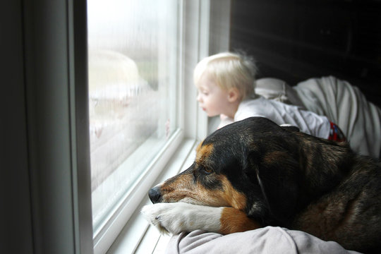 Pet Dog and Little Baby Looking Dreamily out Window on a Rainy Day