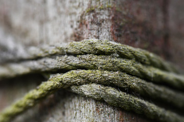 Mossy Twine on a Fence Post