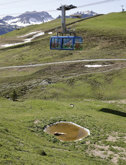 A cable car of the Weisshornbahnen is seen above as bear Napa enjoys a bath in a pond at the Arosa Baerenland sanctuary in the mountain resort of  Arosa