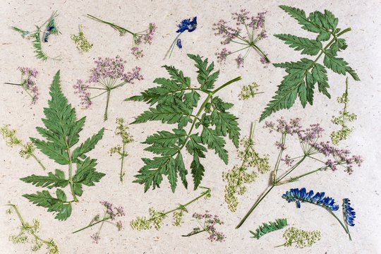 Dried meadow flowers and herbs on rough wrapping paper.