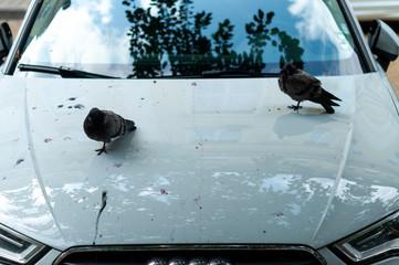 shit of bird, on white car