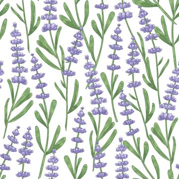 Botanical seamless pattern with lavender flowers hand drawn on white background