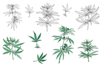 Decorative set of green branch of big hemp and leaves