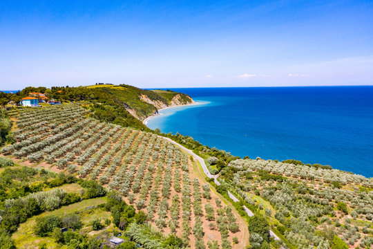 Aerial view of vineyard by the sea and seaside with viticulture