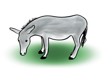 Digital illustration, color sketch of grey donkey on white background, outline hand painted drawing