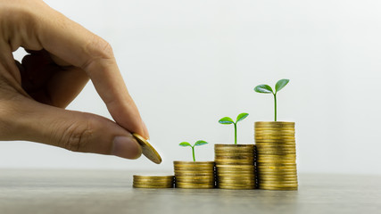 Long-term investment or making money with the right concepts. A business man hand putting coin on stack of coins on a  table with growth plant on coins pile. Depicts a standing and stable investment.