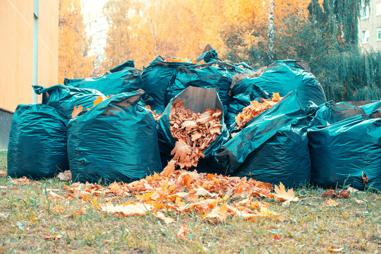 bags with autumn leaves. cleaning.