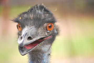 Fotobehang Struisvogel portrait of an ostrich