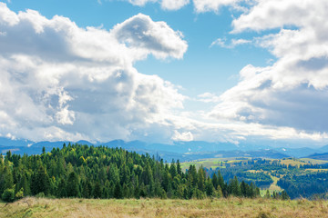 early autumn countryside on a cloudy day. beautiful landscape in mountains. coniferous forest on rolling hills. september sunny dry weather with gorgeous cloudscape