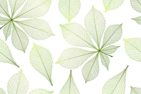 Seamless pattern with chestnut leaves. Vector illustration.