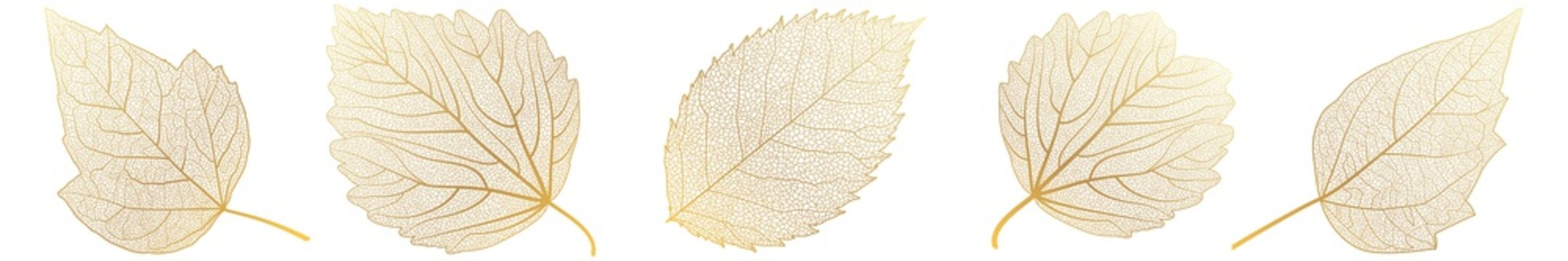 Set leaves on white. Vector illustration.